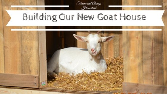 Building our new goat house forever always homestead for Building a new house blog