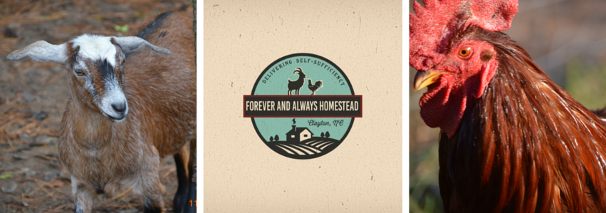 Forever and Always Homestead