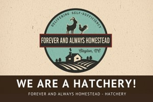 We are now a licensed hatchery!