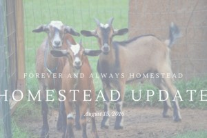 Homestead Update August 15, 2016