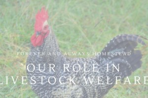 Our Role In Livestock Welfare