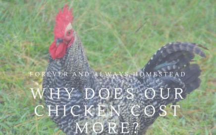 Chicken Cost