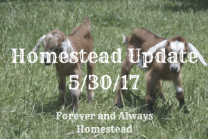 Homestead Update – 5/30/2017
