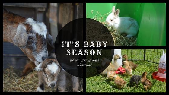 Baby Season