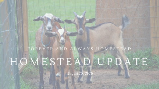 Homestead Update