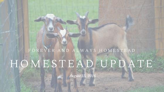 Homestead Update